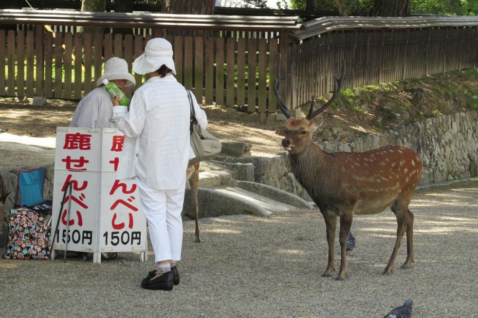 Deers tempting for shika-senbei
